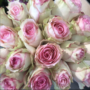 Roses pastels